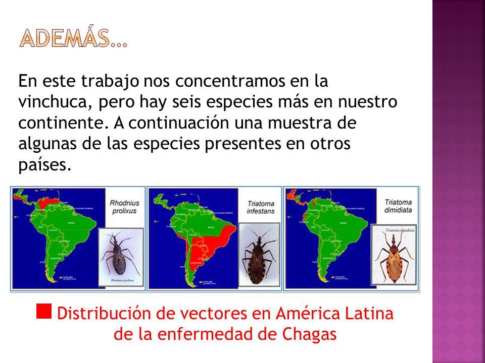 Cuidemos nuestras mascotas, seamos higiénicos y ordenados … tal vez así, la enfermedad de Chagas no dure tantos años.