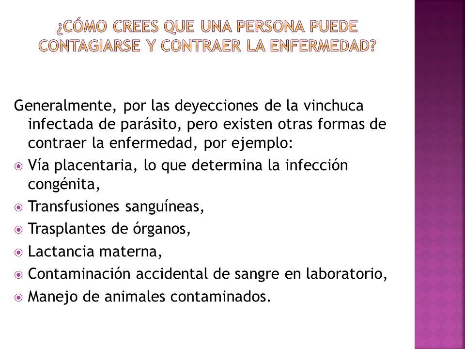 Período agudo: Caracterizado por una relativa abundancia de parásitos en la sangre (parasitemia).