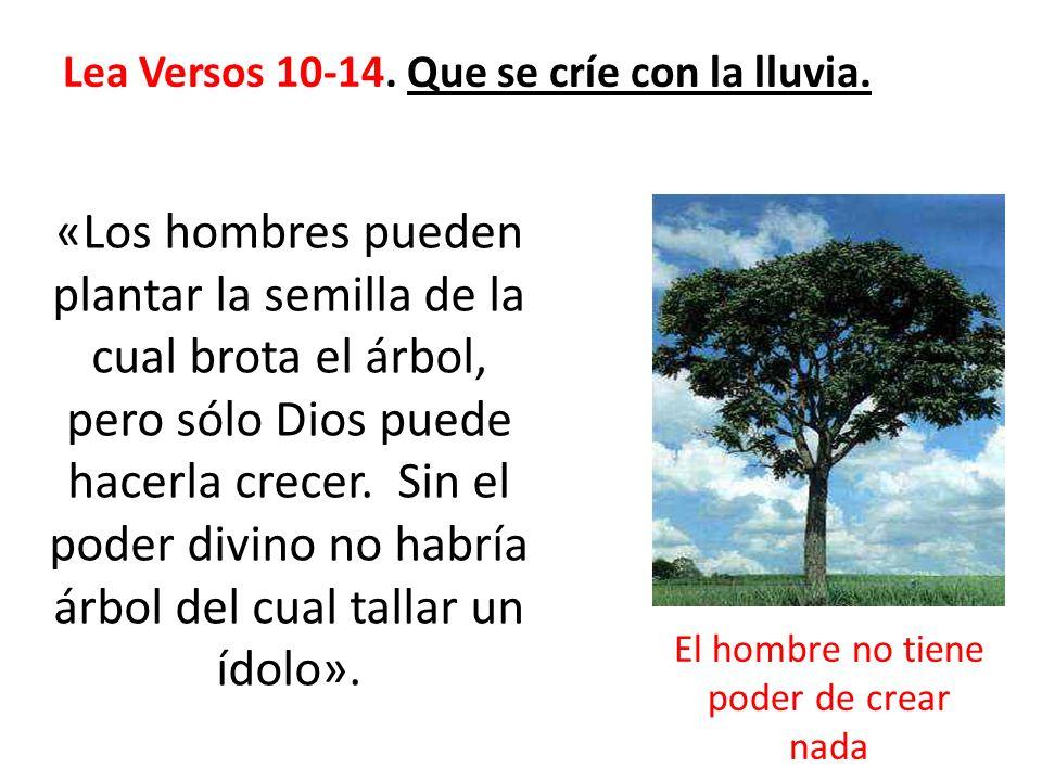 Lea Versos 10-14. Que se críe con la lluvia. «Los hombres pueden plantar la semilla de la cual brota el árbol, pero sólo Dios puede hacerla crecer. Si