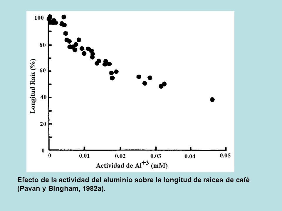 Efecto de la actividad del aluminio sobre la longitud de raíces de café (Pavan y Bingham, 1982a).