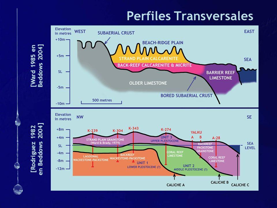 Perfiles Transversales [Ward 1985 en Beddows 2004] [Rodriguez 1982 en Beddows 2004]