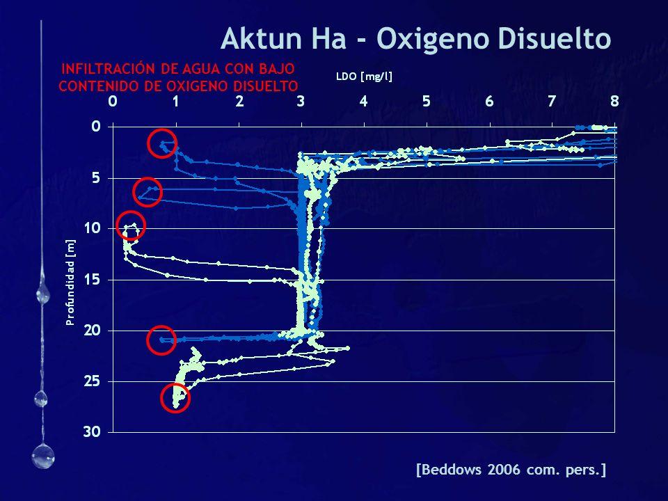 Aktun Ha - Oxigeno Disuelto [Beddows 2006 com. pers.] INFILTRACIÓN DE AGUA CON BAJO CONTENIDO DE OXIGENO DISUELTO
