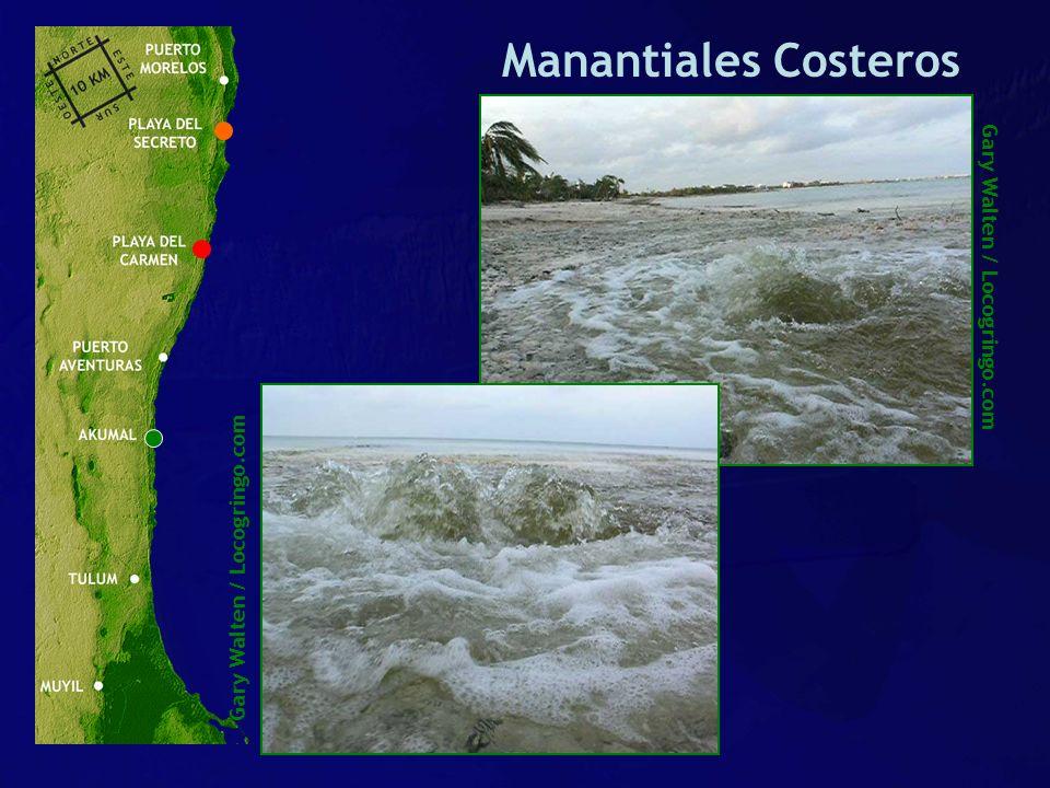 Gary Walten / Locogringo.com Manantiales Costeros