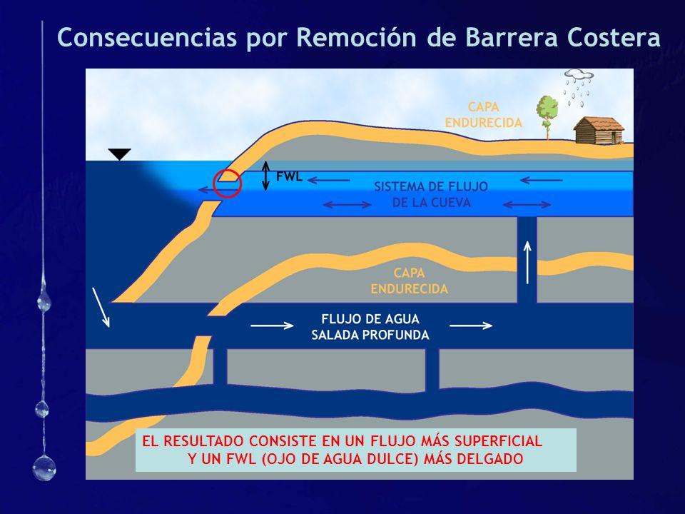 Consecuencias por Remoción de Barrera Costera EL RESULTADO CONSISTE EN UN FLUJO MÁS SUPERFICIAL Y UN FWL (OJO DE AGUA DULCE) MÁS DELGADO
