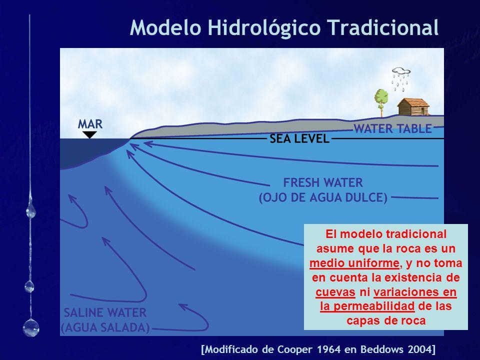 Modelo Hidrológico Tradicional [Modificado de Cooper 1964 en Beddows 2004] El modelo tradicional asume que la roca es un medio uniforme, y no toma en