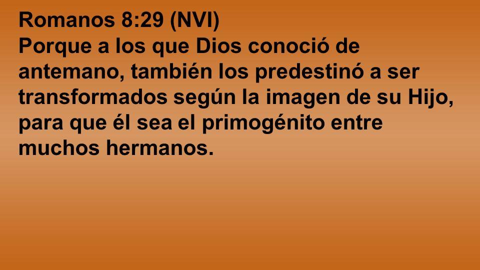 Romanos 8:29 (NVI) Porque a los que Dios conoció de antemano, también los predestinó a ser transformados según la imagen de su Hijo, para que él sea e