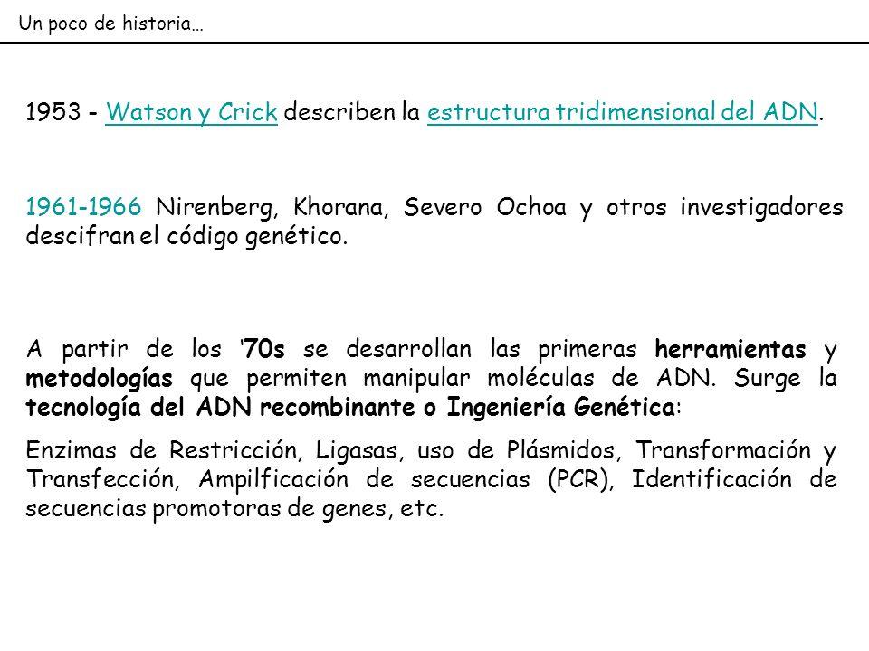 1953 - Watson y Crick describen la estructura tridimensional del ADN.Watson y Crickestructura tridimensional del ADN A partir de los 70s se desarrolla