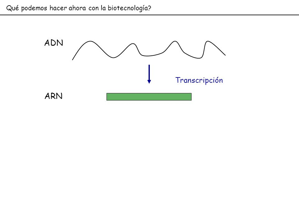 Qué podemos hacer ahora con la biotecnología? ADN Transcripción ARN