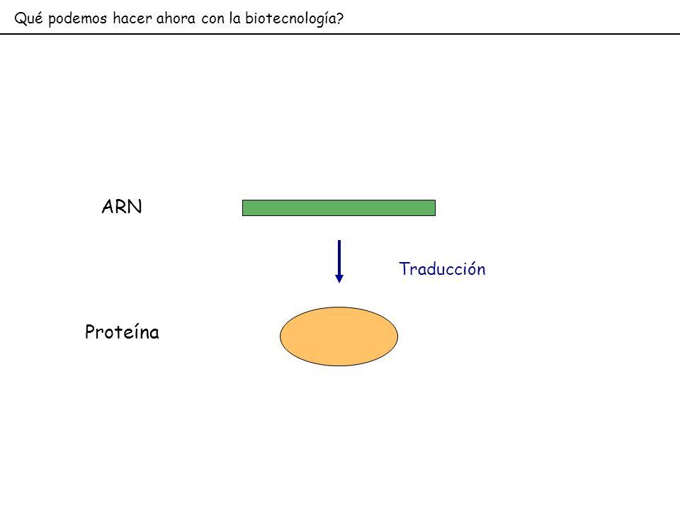 Qué podemos hacer ahora con la biotecnología? ARN Traducción Proteína