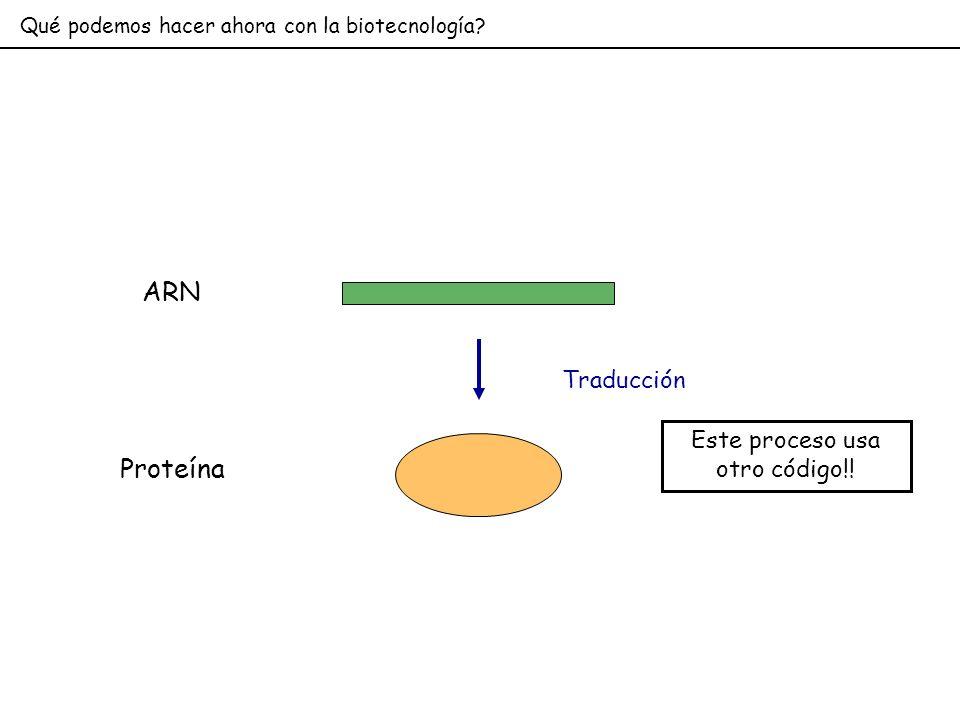Qué podemos hacer ahora con la biotecnología? ARN Traducción Proteína Este proceso usa otro código!!