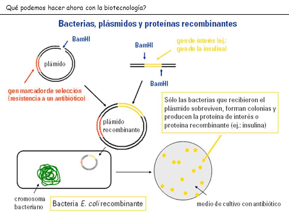 Qué podemos hacer ahora con la biotecnología?