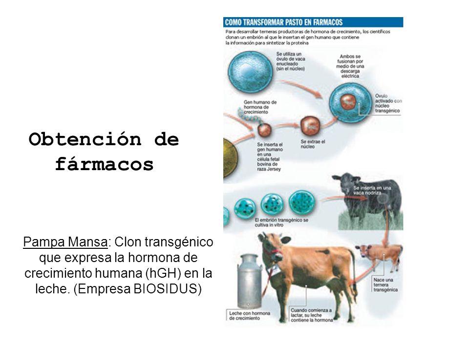 Obtención de fármacos Pampa Mansa: Clon transgénico que expresa la hormona de crecimiento humana (hGH) en la leche. (Empresa BIOSIDUS)