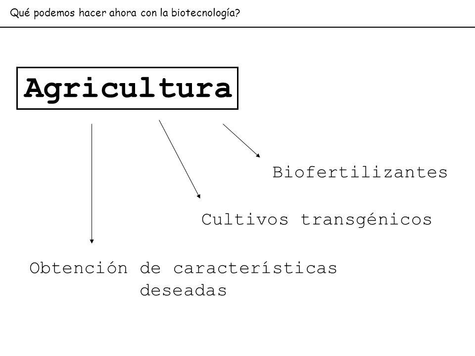 Agricultura Biofertilizantes Cultivos transgénicos Obtención de características deseadas Qué podemos hacer ahora con la biotecnología?