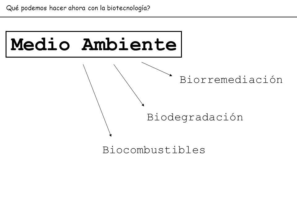 Biorremediación Biodegradación Biocombustibles Medio Ambiente Qué podemos hacer ahora con la biotecnología?