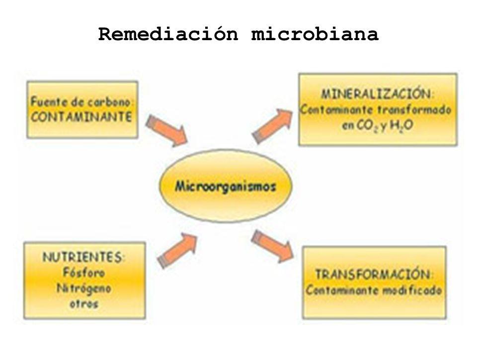 Remediación microbiana