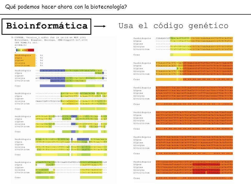 Bioinformática Qué podemos hacer ahora con la biotecnología? Usa el código genético