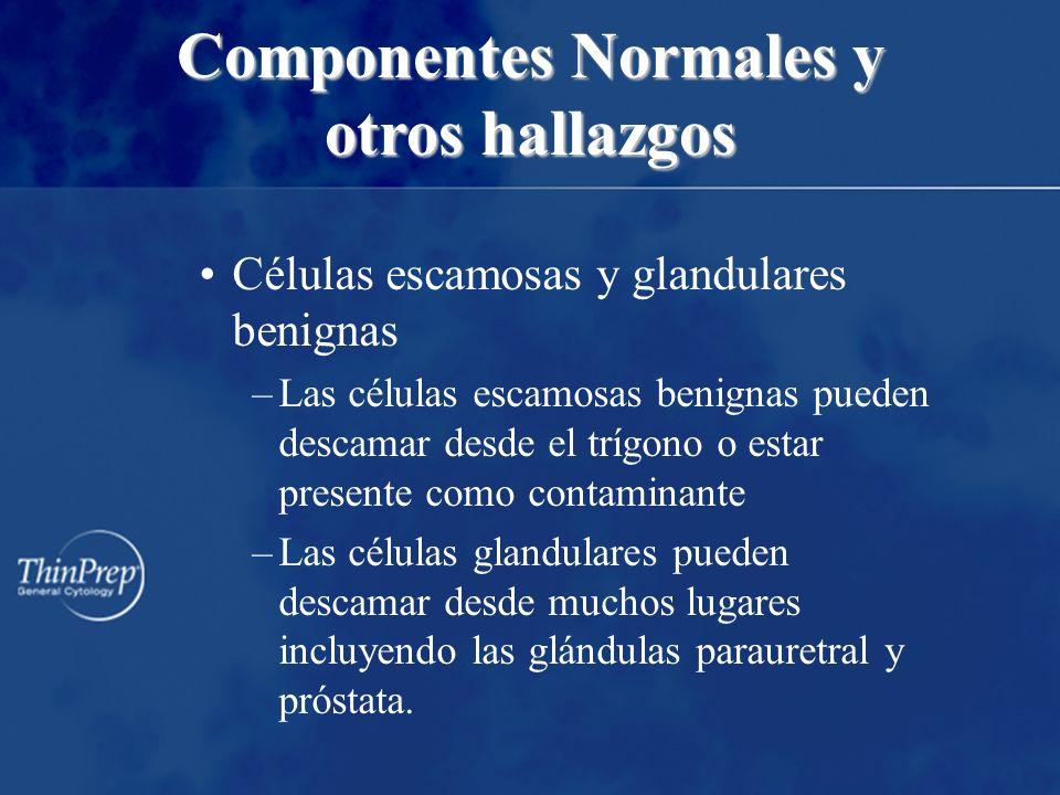 Células escamosas y glandulares benignas –Las células escamosas benignas pueden descamar desde el trígono o estar presente como contaminante –Las célu