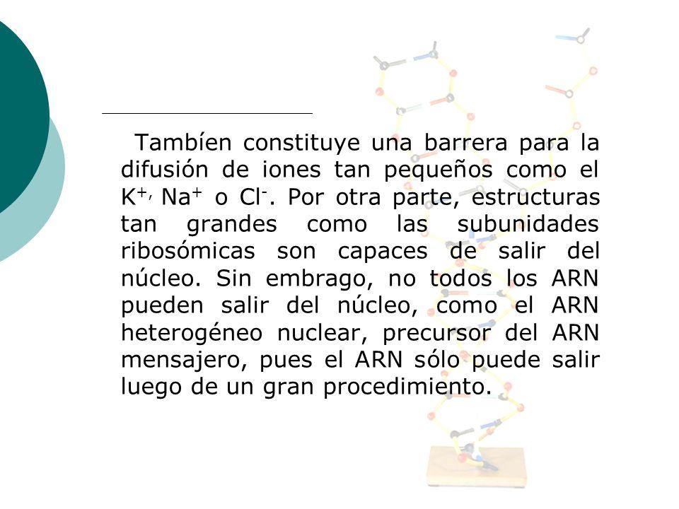 Tambíen constituye una barrera para la difusión de iones tan pequeños como el K +, Na + o Cl -. Por otra parte, estructuras tan grandes como las subun