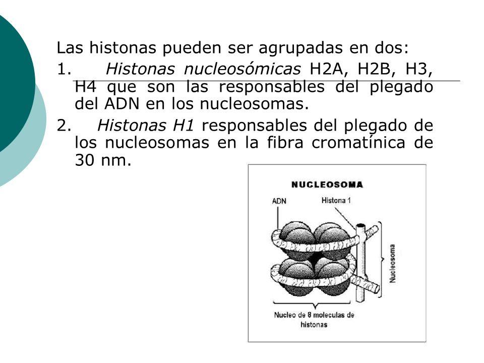 Las histonas pueden ser agrupadas en dos: 1. Histonas nucleosómicas H2A, H2B, H3, H4 que son las responsables del plegado del ADN en los nucleosomas.