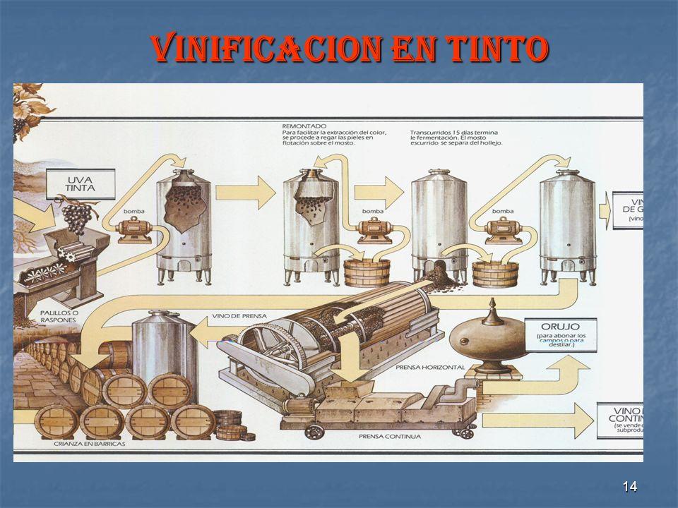 14 VINIFICACION EN TINTO