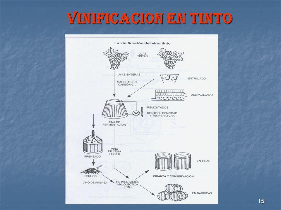 15 VINIFICACION EN TINTO