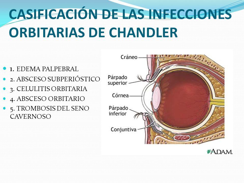 CASIFICACIÓN DE LAS INFECCIONES ORBITARIAS DE CHANDLER 1. EDEMA PALPEBRAL 2. ABSCESO SUBPERIÓSTICO 3. CELULITIS ORBITARIA 4. ABSCESO ORBITARIO 5. TROM