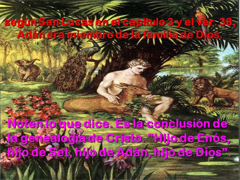 según San Lucas en el capitulo 3 y el ver. 38, Adán era miembro de la familia de Dios. Noten lo que dice. Es la conclusión de la genealogía de Cristo.
