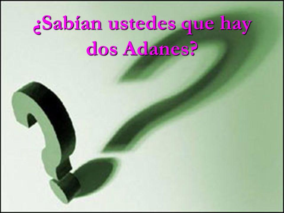 ¿Sabían ustedes que hay dos Adanes?