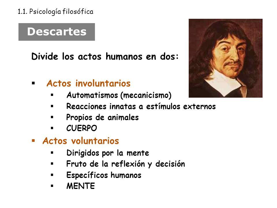 Descartes Divide los actos humanos en dos: Actos involuntarios Automatismos (mecanicismo) Reacciones innatas a estímulos externos Propios de animales