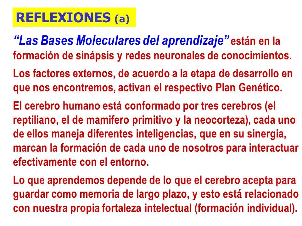 Las Bases Moleculares del aprendizaje están en la formación de sinápsis y redes neuronales de conocimientos.