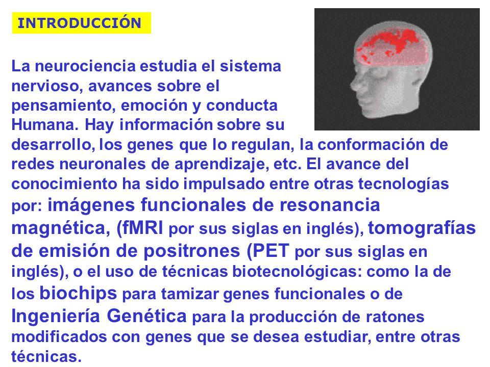 La neurociencia estudia el sistema nervioso, avances sobre el pensamiento, emoción y conducta Humana.