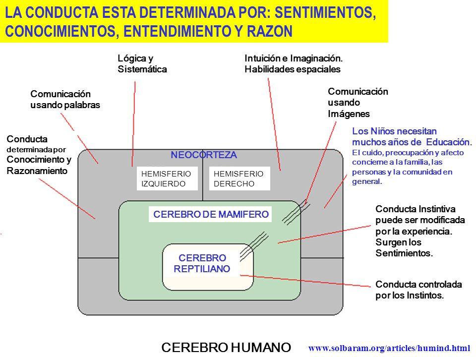 CEREBRO HUMANO CEREBRO REPTILIANO CEREBRO DE MAMIFERO NEOCORTEZA HEMISFERIO IZQUIERDO HEMISFERIO DERECHO Lógica y Sistemática Intuición e Imaginación.