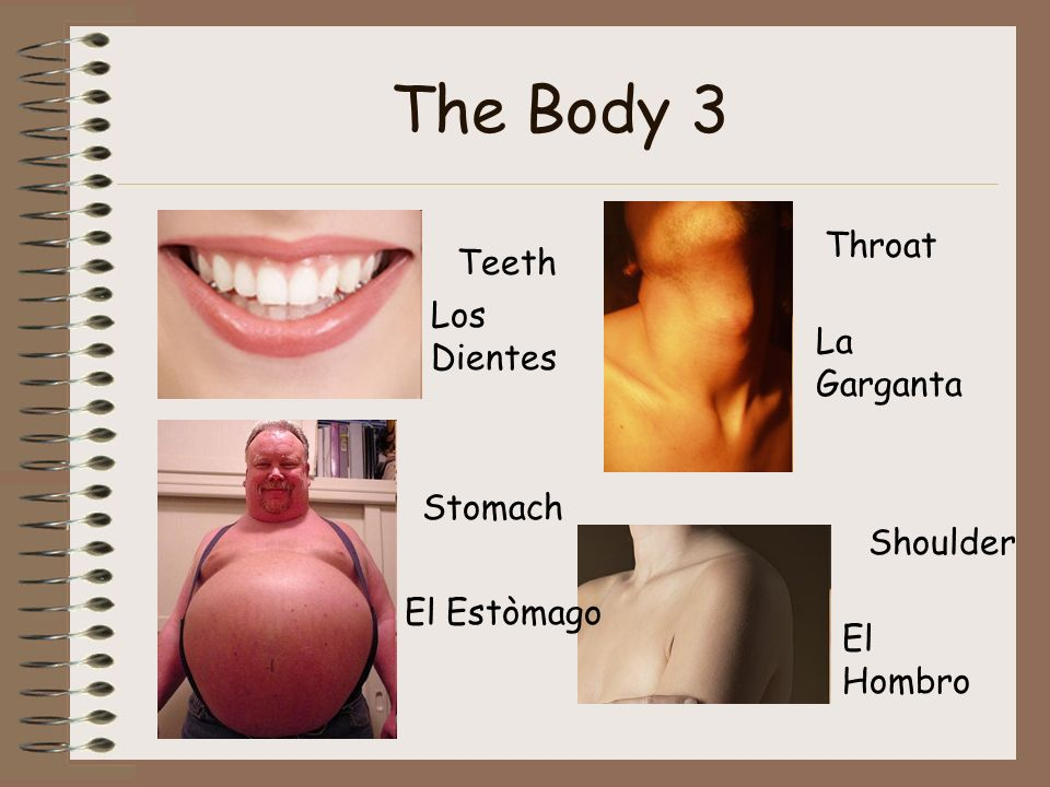 The Body 3 Teeth Los Dientes Stomach El Estòmago Throat La Garganta Shoulder El Hombro
