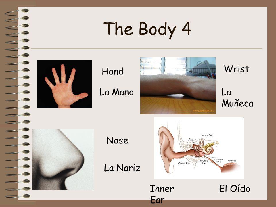 The Body 4 Hand La Mano Nose La Nariz Wrist La Muñeca Inner Ear El Oído