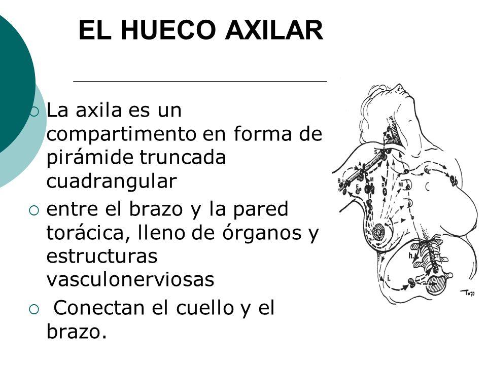 EL HUECO AXILAR La axila es un compartimento en forma de pirámide truncada cuadrangular entre el brazo y la pared torácica, lleno de órganos y estruct