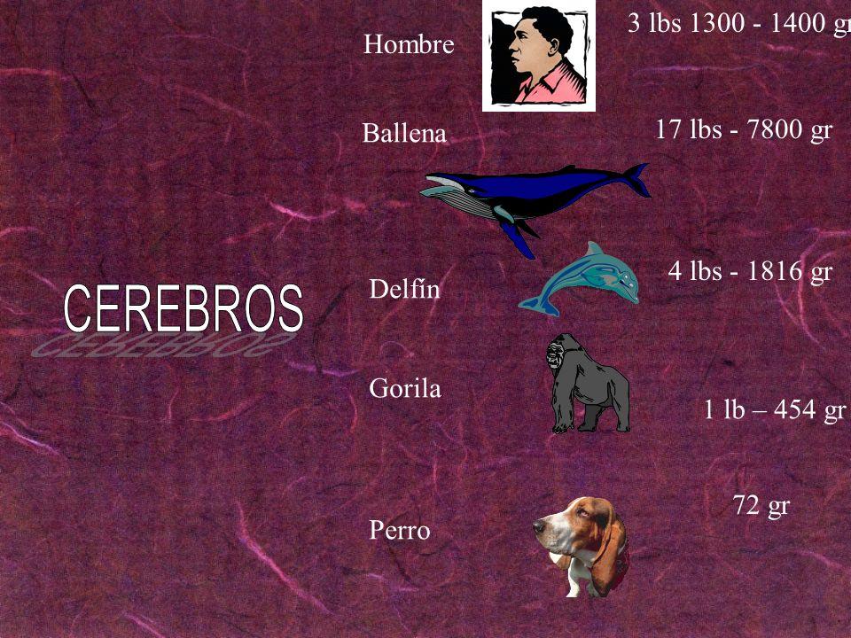 Hombre 3 lbs 1300 - 1400 gr 4 lbs - 1816 gr 72 gr Ballena 17 lbs - 7800 gr 1 lb – 454 gr Delfín Gorila Perro