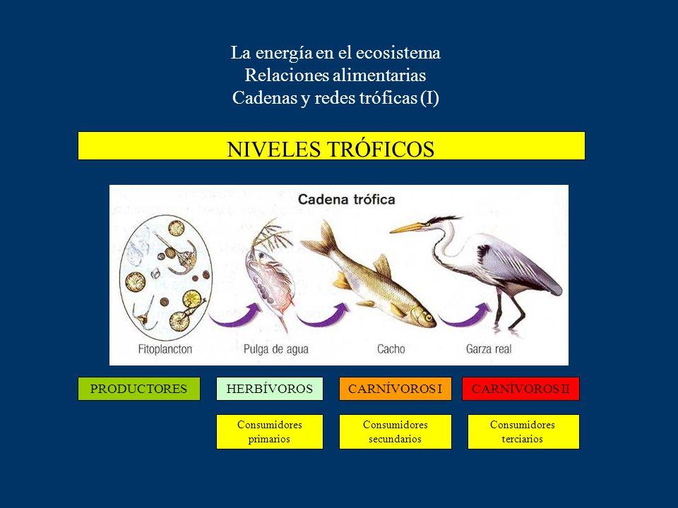 La energía en el ecosistema Relaciones alimentarias Niveles tróficos: Productores, consumidores, descomponedores El ecosistema concebido como un flujo