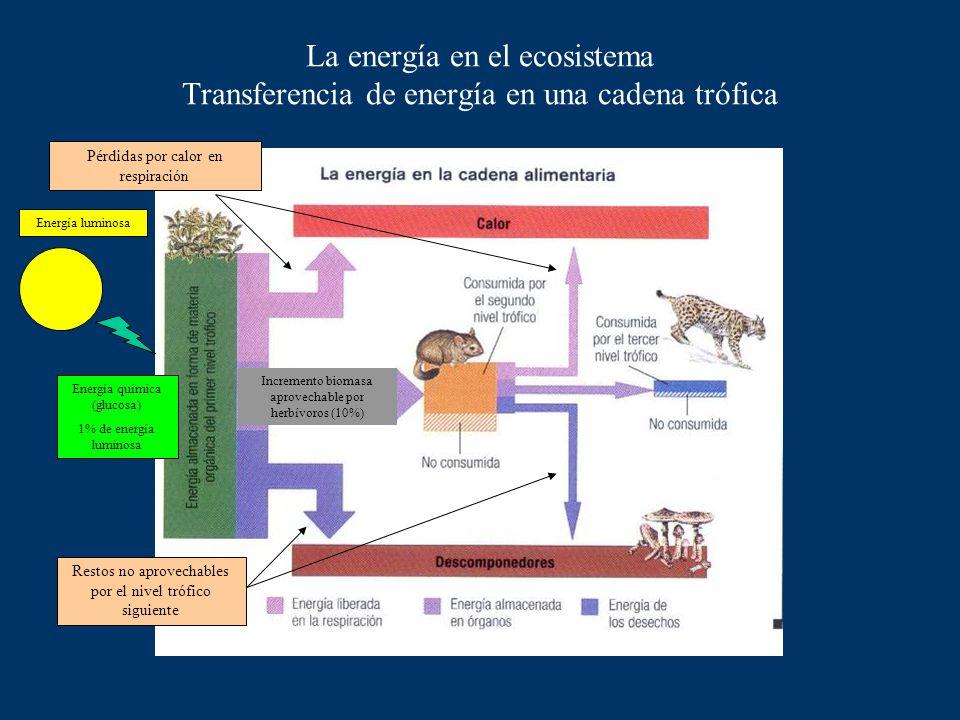La energía en la cadena alimentaria En los seres vivos la energía fluye a lo largo de las comunidades. Cada categoría de organismo se llama nivel tróf