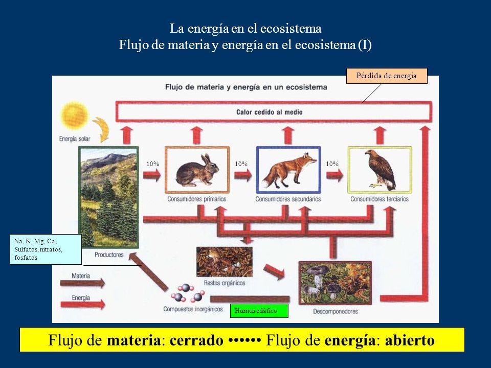La energía en el ecosistema Transferencia de energía en una cadena trófica Pérdidas por calor en respiración Energía química (glucosa) 1% de energía l