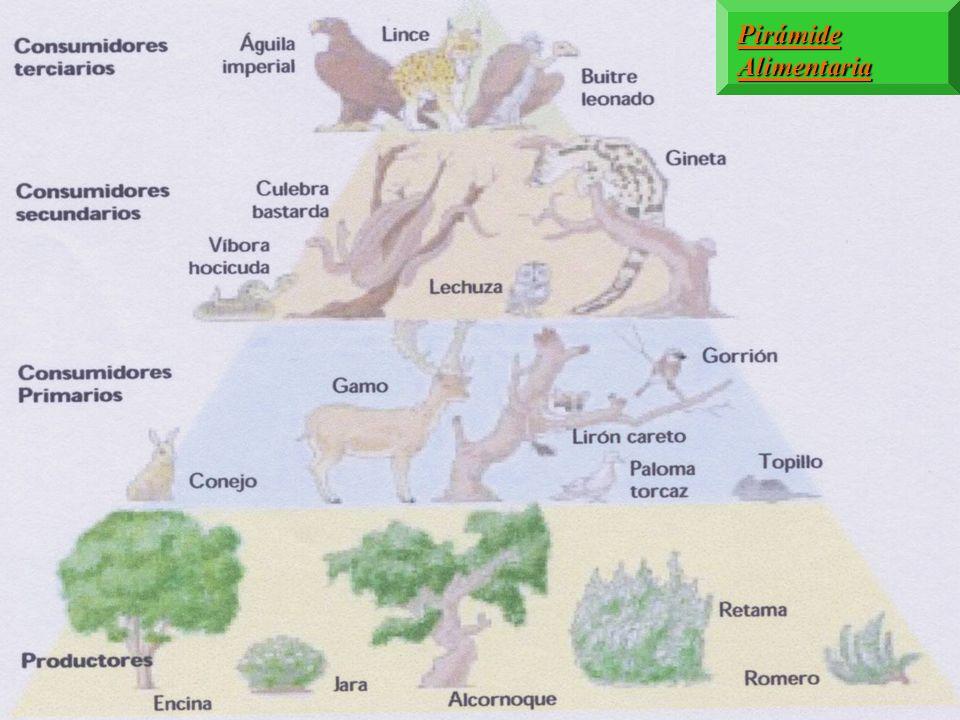 FUNCIONES DE LOS ORGANISMOS EN CADA COMUNIDAD Los organismos fotosintéticos se llaman productores, porque producen alimento para ellos mismos. Además,