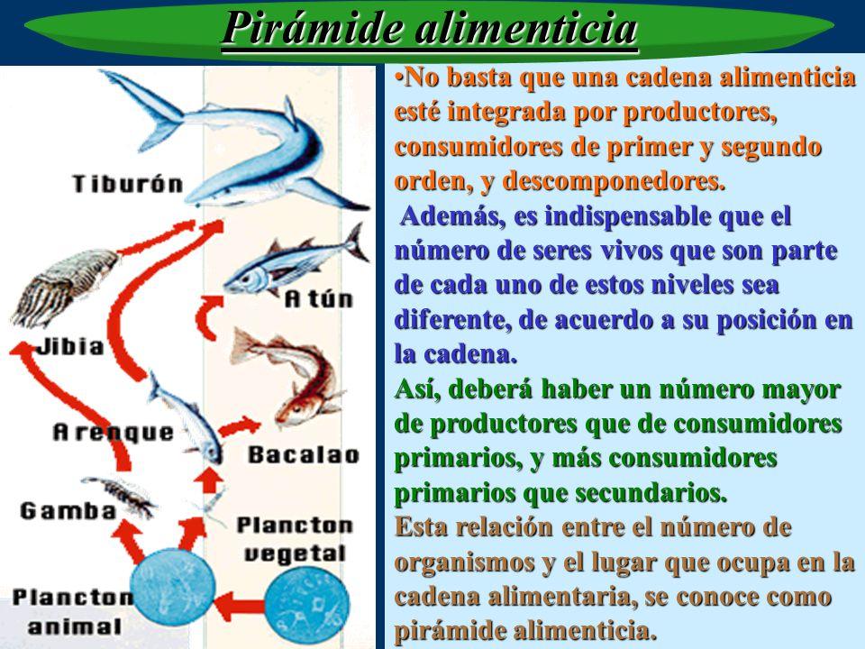 DEPREDADORES CARNÍVOROS HERBÍVOROS PRODUCTORES DESCOMPONEDORES En una pirámide se aprecia la estructura alimentaria de un ecosistema en donde conviven