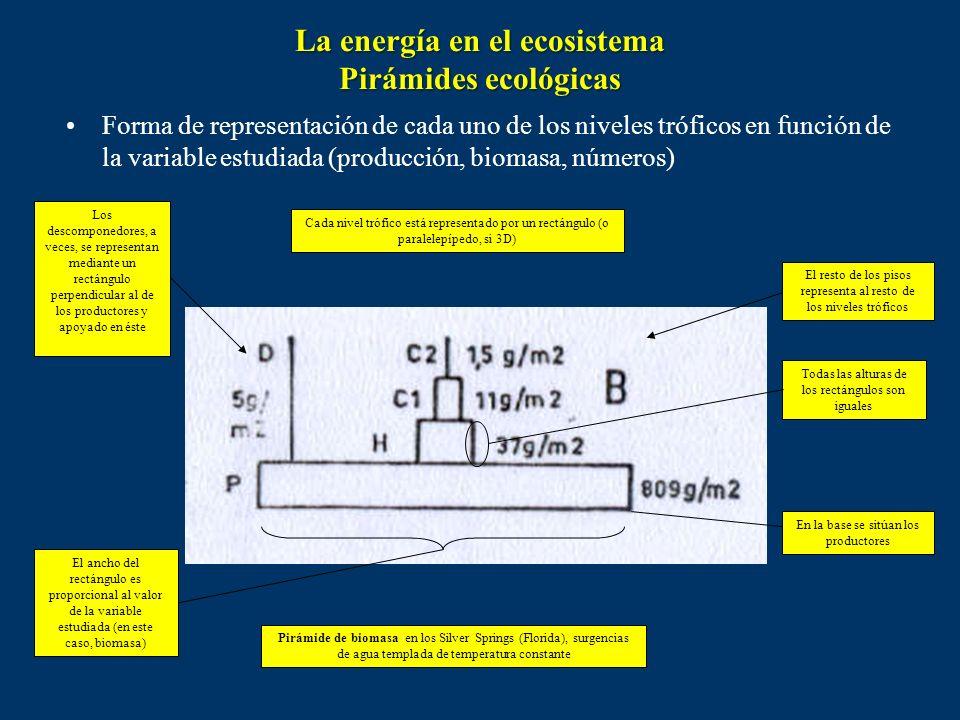 Son esquemas que se utilizan para representar cuantitativamente las relaciones tróficas entre los distintos niveles de un ecosistema. Se utilizan barr