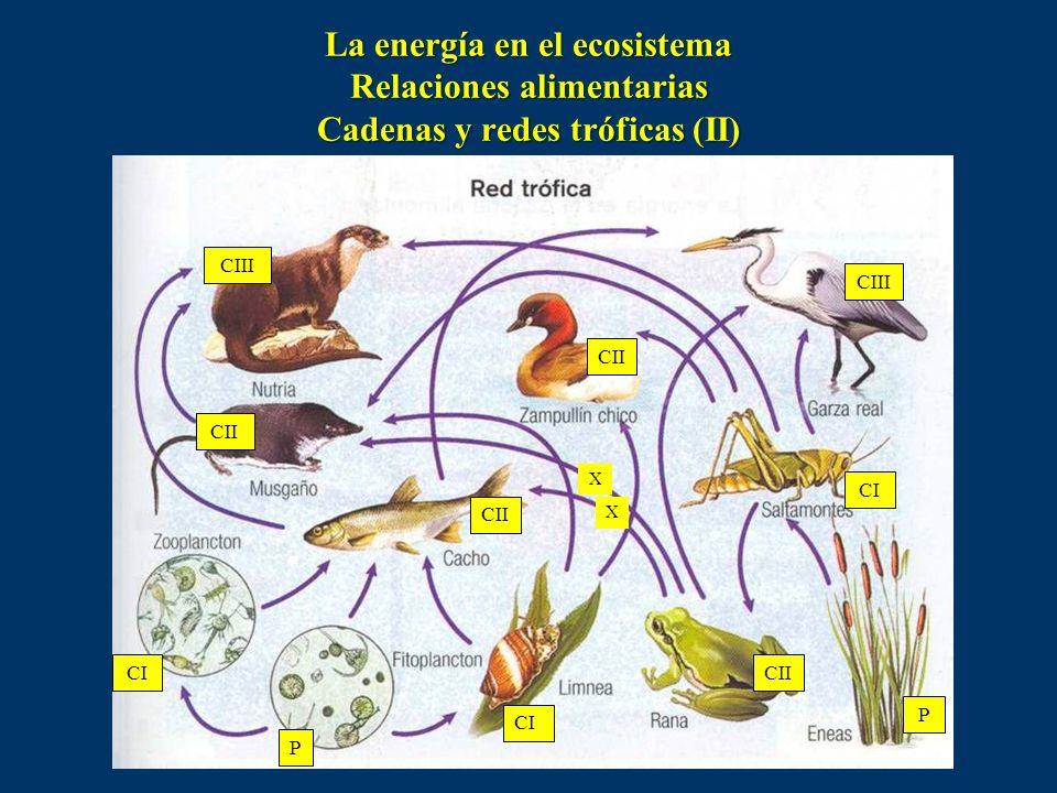 En un ecosistema acuático la biodiversidad, o número de especies vegetales y animales que habitan en él, es menor que en uno terrestre. La base nutrit