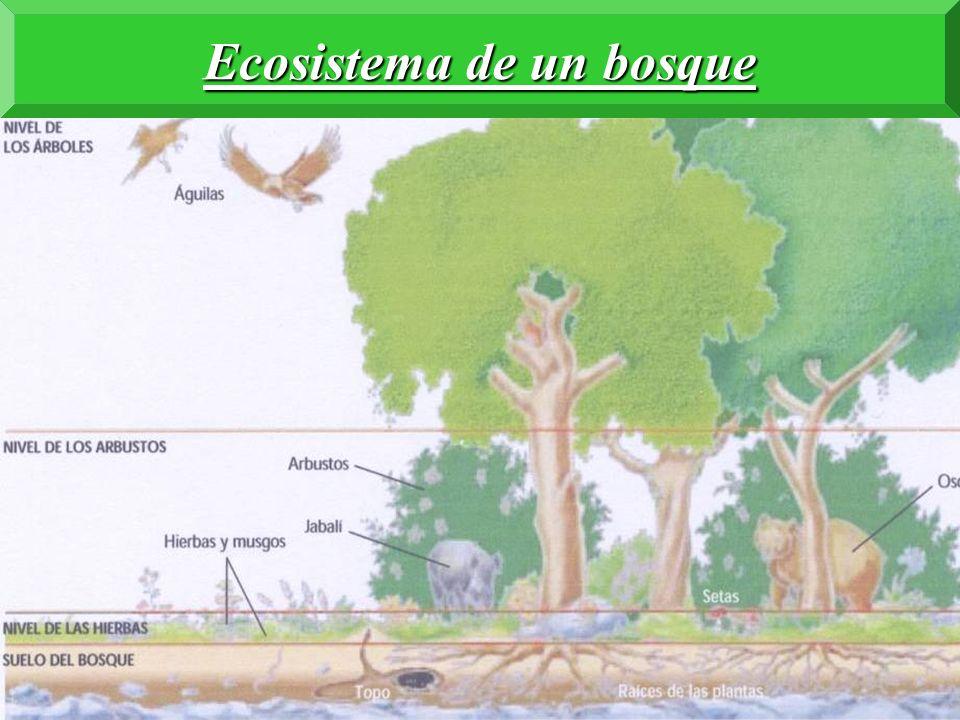 Ecosistema de la sabana africana Animales herbívoros Animales carnívoros Animales depredadores