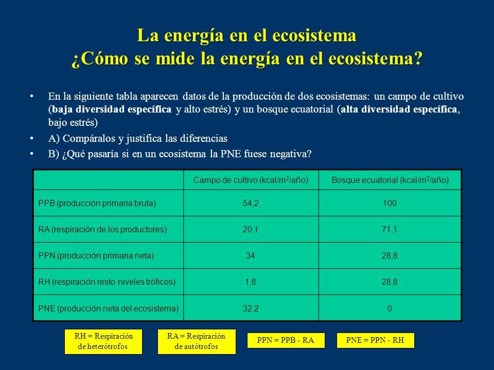 Productividad Es la relación entre la producción y la biomasa. p = P / B La productividad bruta será : pB = PB / B La productividad neta (o tasa de re
