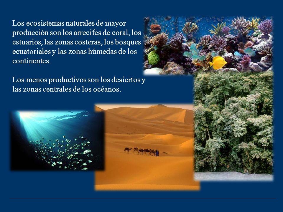Tiempo de renovación Es el tiempo que tarda un nivel trófico, o un ecosistema completo, en renovar su biomasa. tr = B / PN Mide el tiempo de permanenc