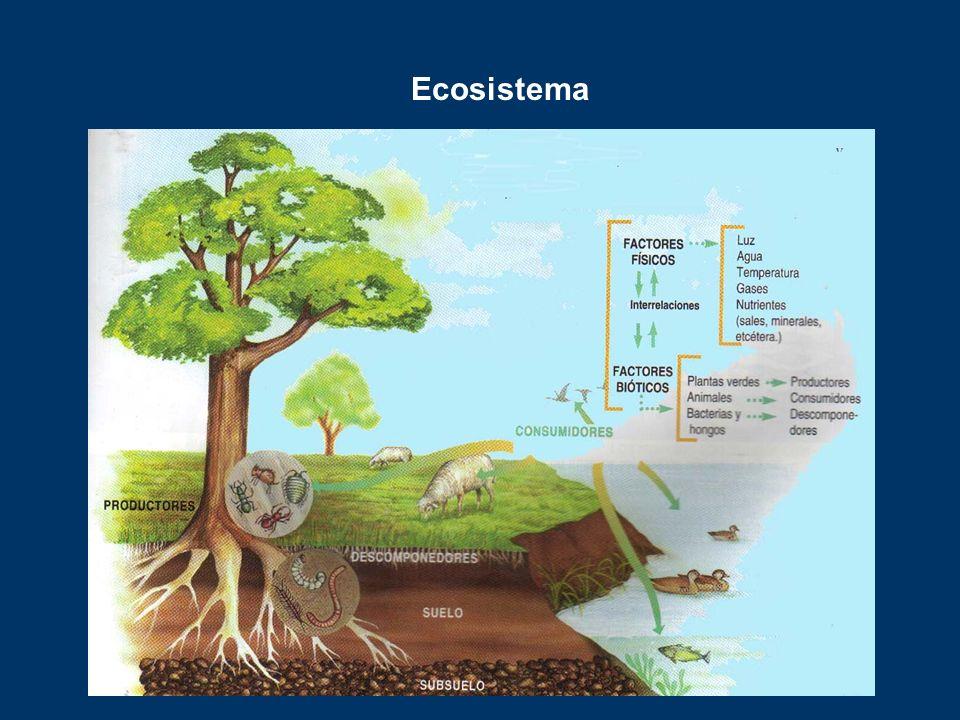 Los ecosistemas Un ecosistema está formado por un lugar y los seres vivos que habitan en el mismo. Las relaciones más importantes entre los seres vivo
