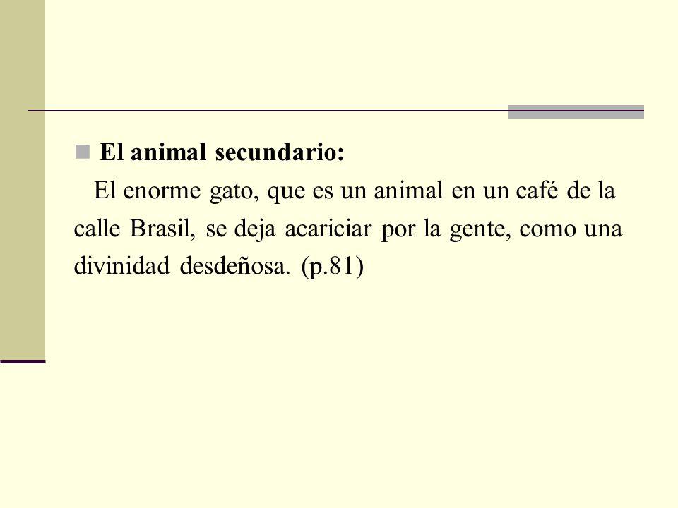 El animal secundario: El enorme gato, que es un animal en un café de la calle Brasil, se deja acariciar por la gente, como una divinidad desdeñosa. (p