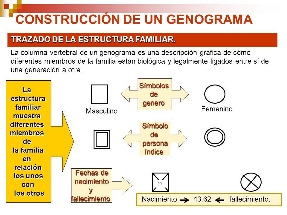 CONSTRUCCIÓN DE UN GENOGRAMA TRAZADO DE LA ESTRUCTURA FAMILIAR. La columna vertebral de un genograma es una descripción gráfica de cómo diferentes mie