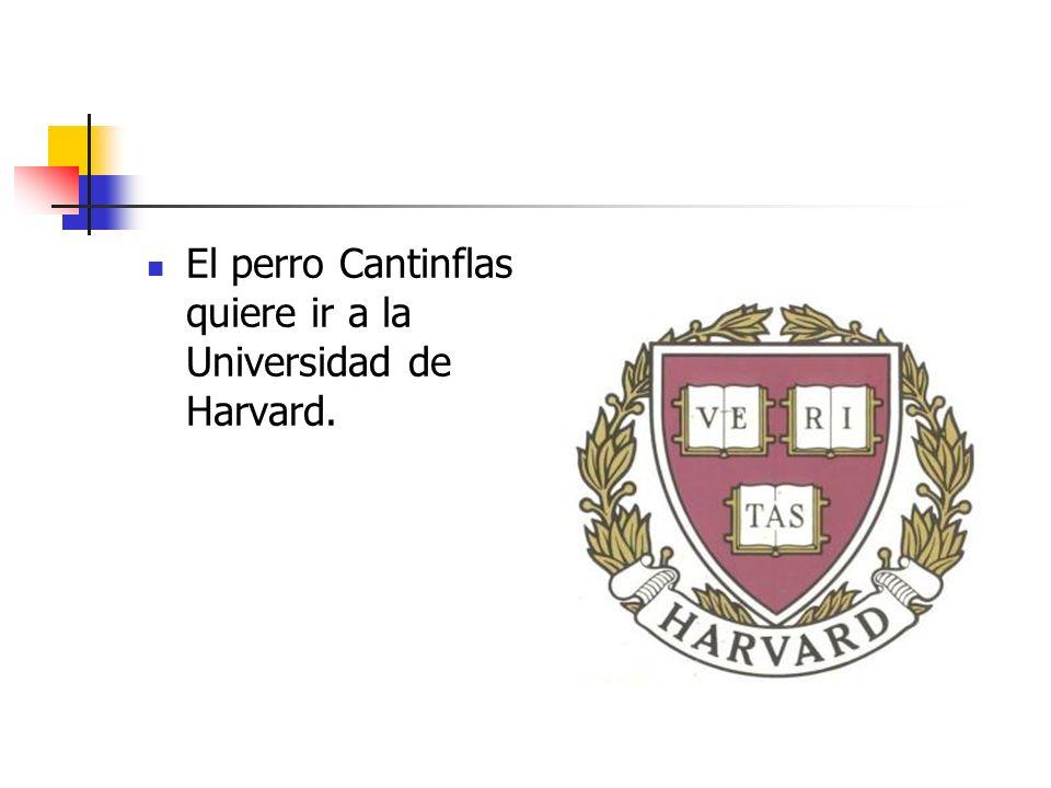 El perro Cantinflas quiere ir a la Universidad de Harvard.